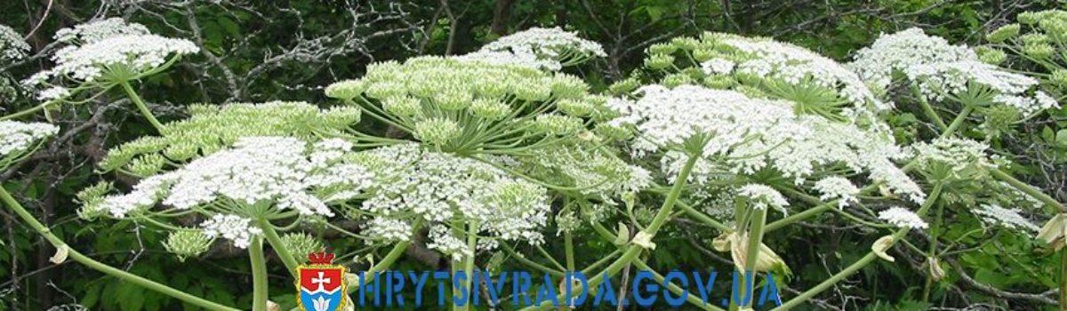 Оберігайтесь отруйних рослин !!!