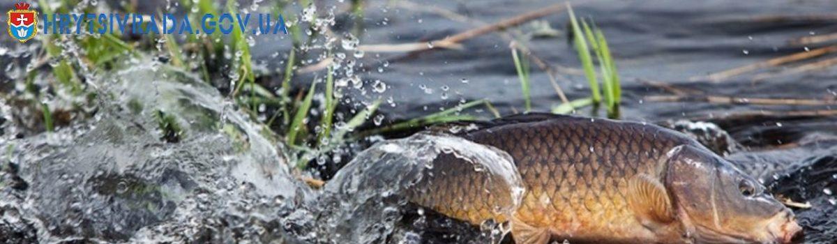 Весняно – літня заборона на лов риби