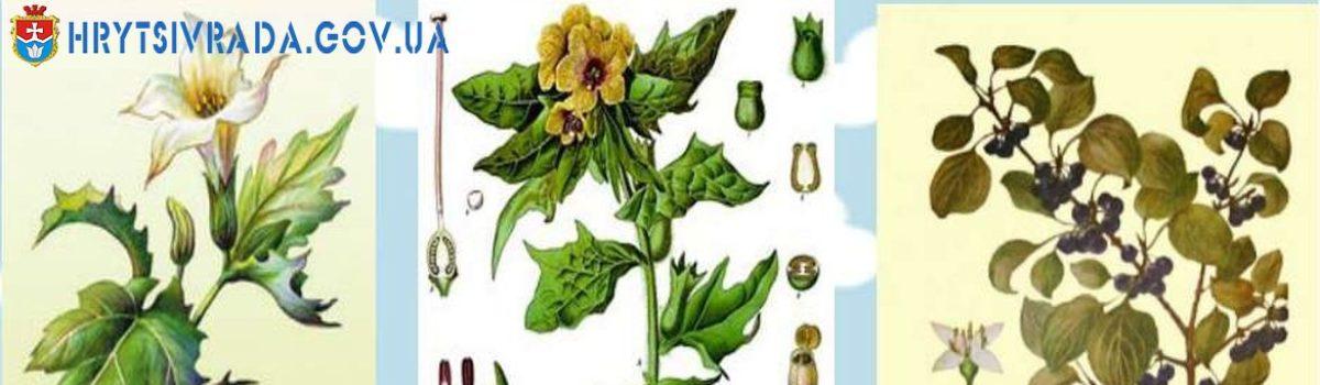 Отруйні, лікарські і шкідливі трави на луках, пасовищах і в лісах