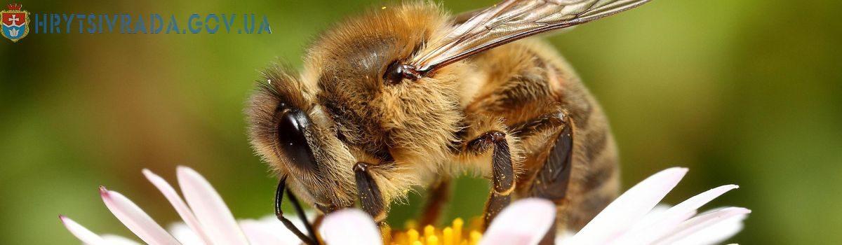 Захистимо бджоли від отруєнь!