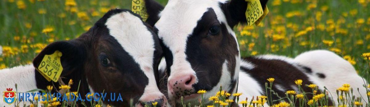 Проведення осінньої диспансеризації тварин в приватному секторі