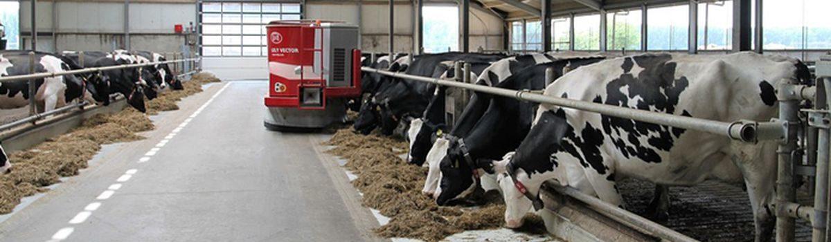 Проєкт «Сімейні молочні ферми»: створення нових робочих місць у сільській місцевості