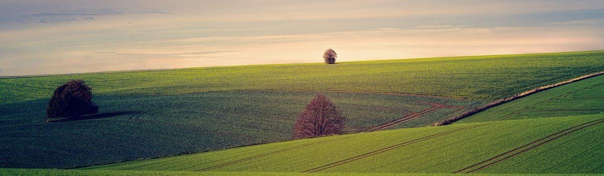 На Хмельниччині відсоткова ставка за результатами торгів досягла 54,23% від нормативної грошової оцінки земельної ділянки