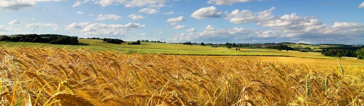 Вітання до Дня працівників сільського господарства!