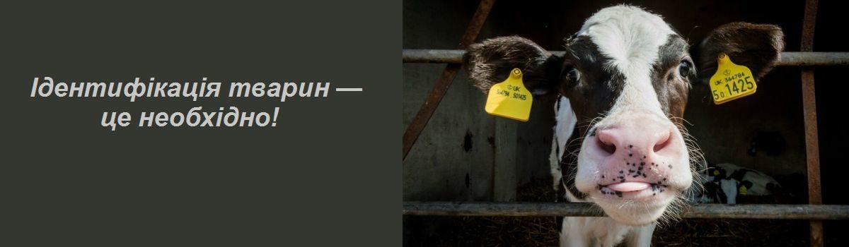 Ідентифікація тварин — це необхідно!
