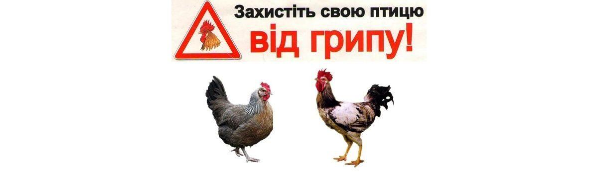 Обережно! Грип птиці!