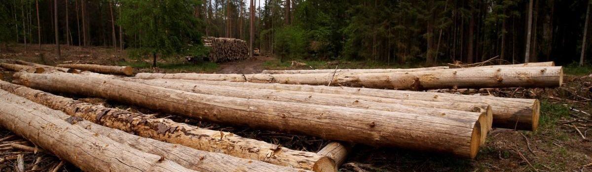 Виявлена незаконна порубка дерев на території ландшафтного парку «Мальованка»