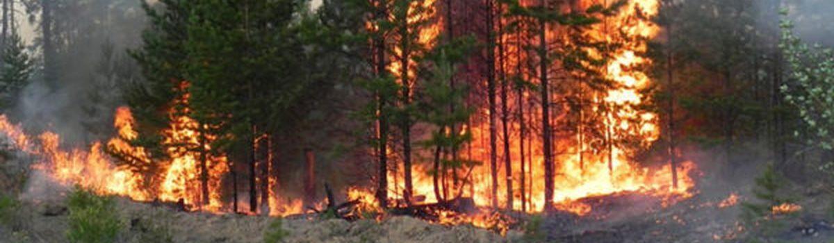 Пожежі в екосистемах!