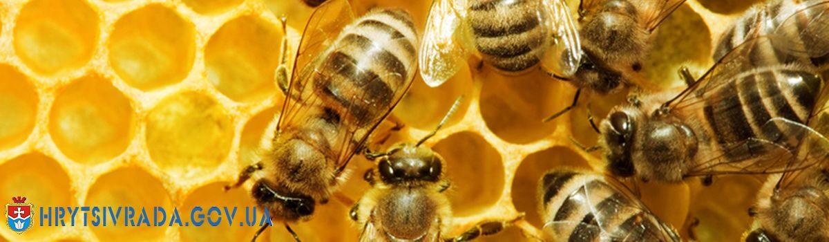 Спеціальна бюджетна дотація за наявні бджолосім'ї у 2021 році
