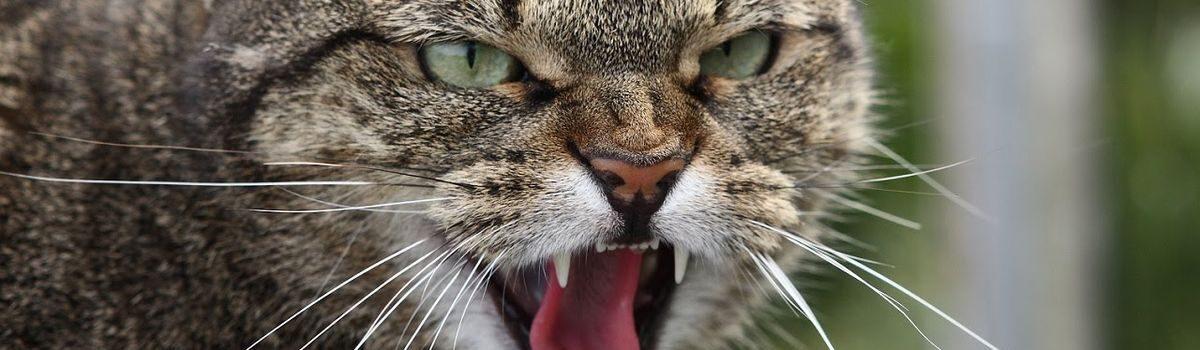 На Шепетівщині нові випадки сказу тварин